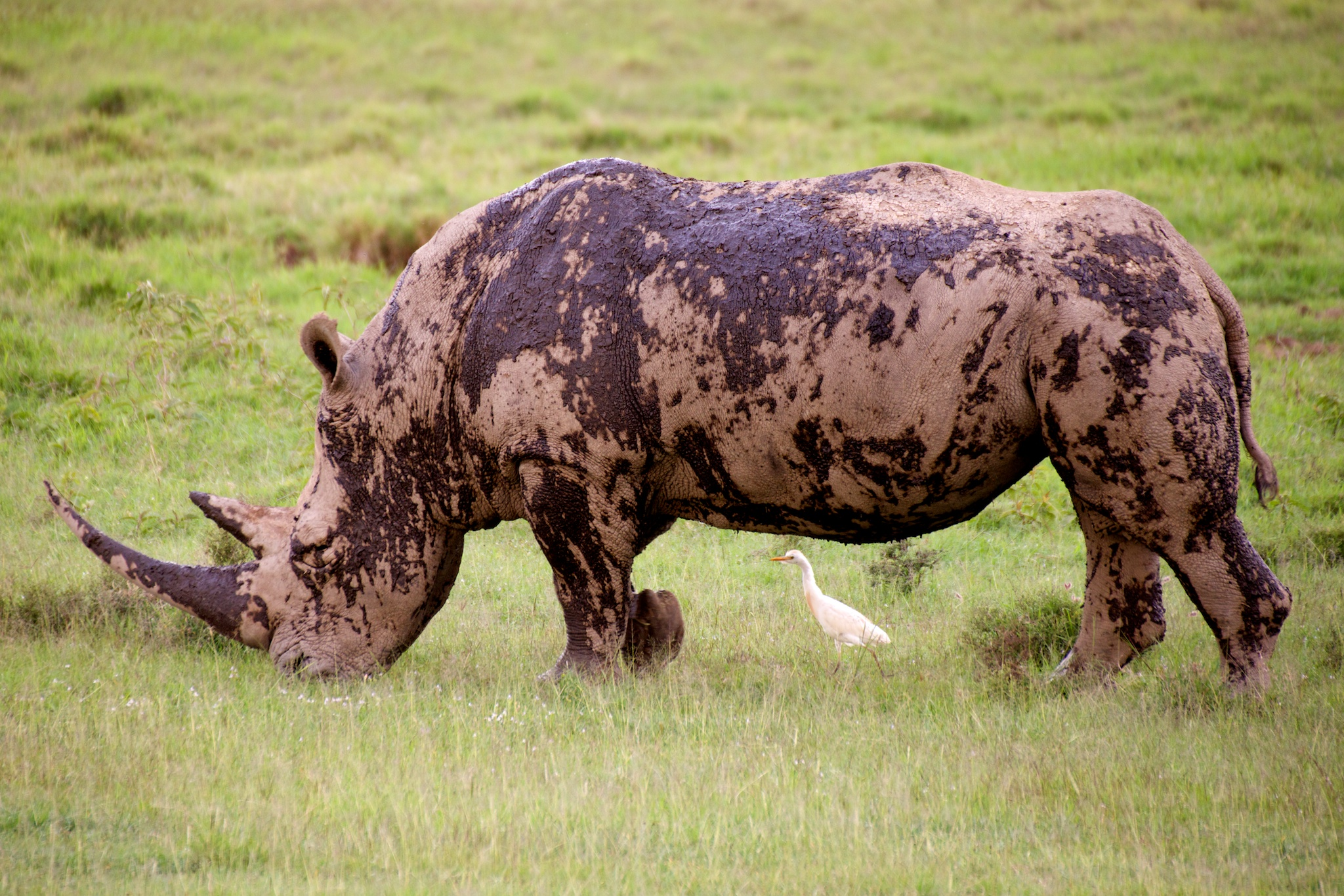 #2: Rhino (and friend)